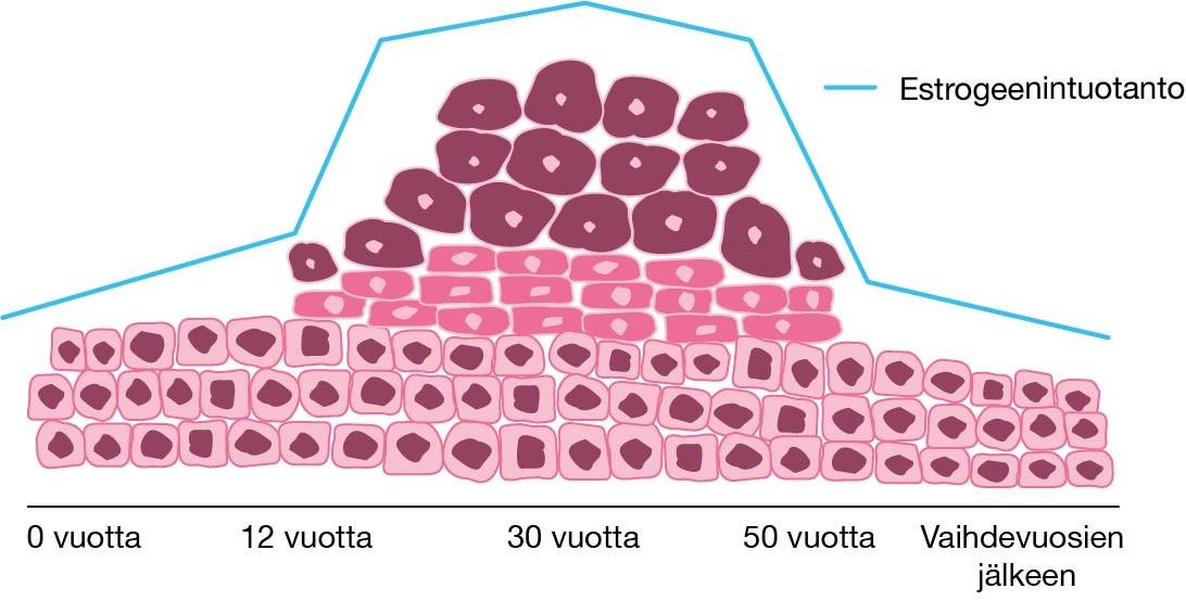 estrokad 0 03 mg